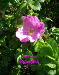 Róża polna. Nowele i fantazje -