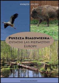 Puszcza Białowieska - Ostatni las pierwotny Europy - Wojciech Biedroń