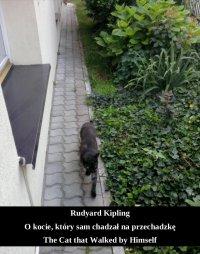 O kocie, który sam chadzał na przechadzkę. The Cat that Walked by Himself - Rudyard Kipling