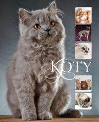 Koty - Karolina Matoga