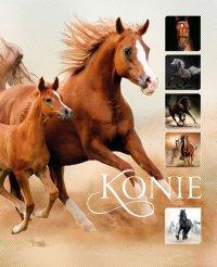 Konie - Ewa Walkowicz